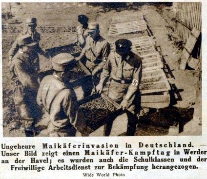 Maikäferkrieg in Werder 1933