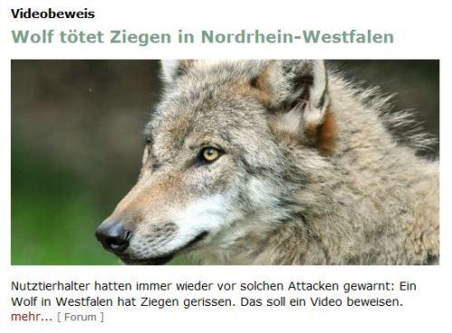 Mißverstandener Wolf